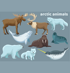 set bundle actic animals vector image