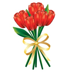 Tulip bouquet with bow vector