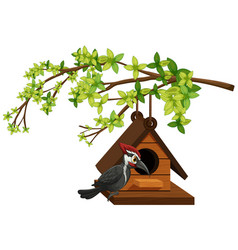 Woodpecker living in birdhouse vector