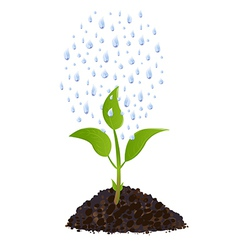 Green young plant with rain drops vector