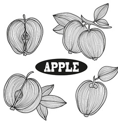 hand drawn apple fruits vector image vector image