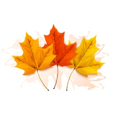 Autumn background with a three colorful leaves vector