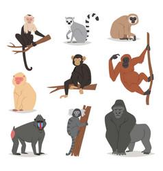 Monkey set cute animal macaque monkeyish vector