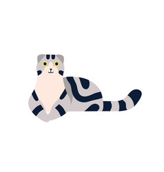 Lying scottish fold cat breed with stripes vector
