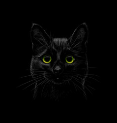 Portrait a cat on a black background vector