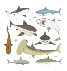 shark different pose set vector image