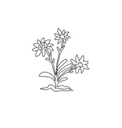 single continuous line drawing beauty and exotic vector image
