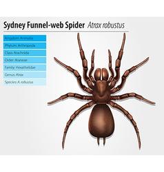 Sydney funnel-web spider vector