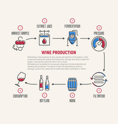 thin line infographic of wine fermentation making vector image vector image