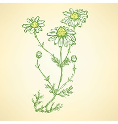 Daisy flower in sketch style vector image