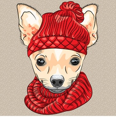 Cartoon hipster cute dog chihuahua vector