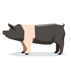 Flat geometric hampshire pig vector