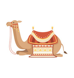 Lying camel two humped desert animal with bridle vector