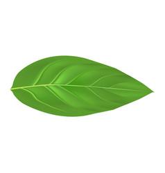 peach leaf mockup realistic style vector image