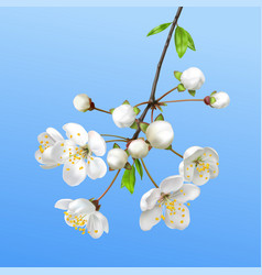 Spring blooming branch realistic vector