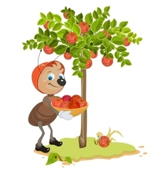 Ant gardener gather apples apple tree and red vector