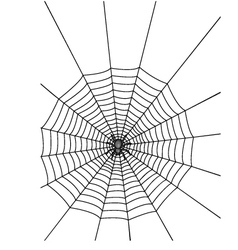 Spider with web vector image vector image