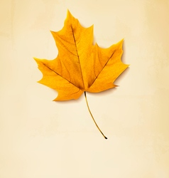 Autumn background with yellow leaf vector