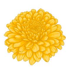 beautiful yellow chrysanthemum flower effect vector image