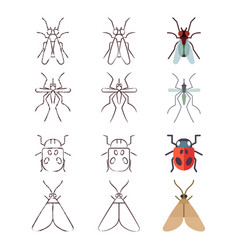 Flat line and skech icons of insects vector