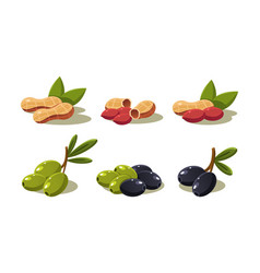 Fresh olives and peanut vegetarian healthy vector