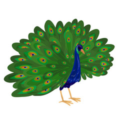 peacock icon cartoon style vector image
