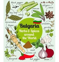 set of Bulgarian herbs and spices vector image