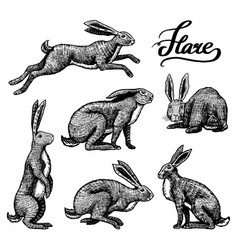 wild hares set rabbits are sitting and jumping vector image
