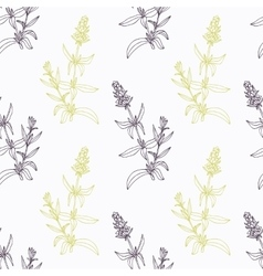 Hand drawn hyssop branch wirh flowers stylized vector image vector image
