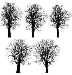 set of different winter trees vector image