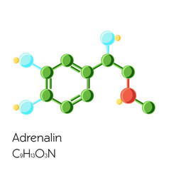adrenalin adrenaline epinephrine hormone vector image