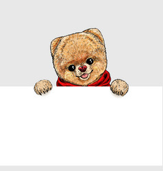 cute pomeranian toy dog holding white banner vector image
