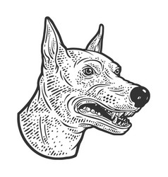 Growling doberman dog sketch vector