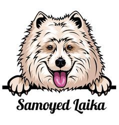 Head samoyed laika - dog breed color image a vector