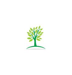 tree botany nature logo vector image