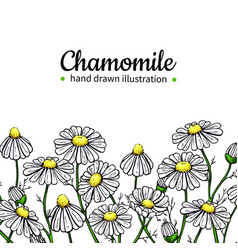 chamomile drawing frame isolated daisy vector image vector image