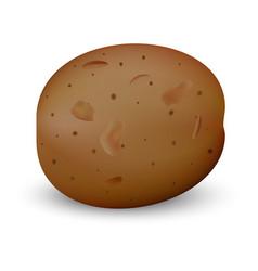 brown potato mockup realistic style vector image