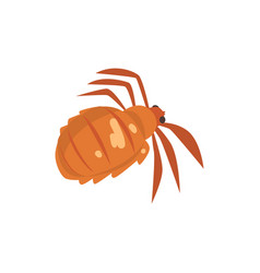 head louse insect parasite cartoon vector image