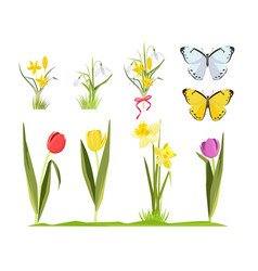 spring flowers floral garden collection bouquet vector image