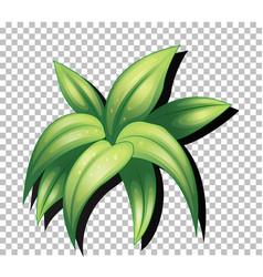 Tropical leaf on transparent background vector