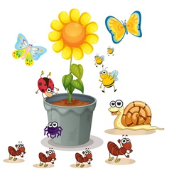 plant and insects vector image vector image