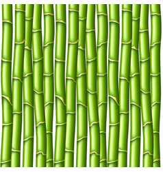 Bamboo texture background vector