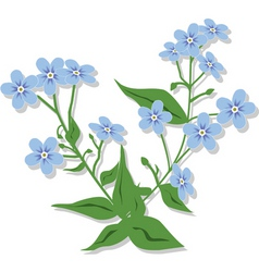 Bouquet of forget-me-nots vector