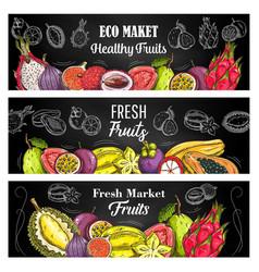 exotic fruit sketch banners eco market food vector image
