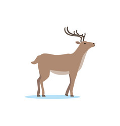 reindeer animal arctic fauna species vector image