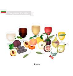 Rakia or fruit brandy popular beverage in bulgari vector