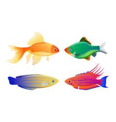 Rare varicolored sea creature cartoon vector