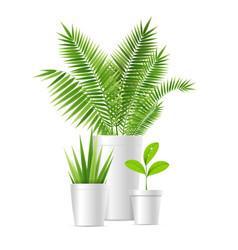 realistic detailed 3d house plant pot set vector image