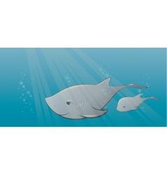 Shark and calf in sea vector