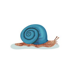 Snail gastropod mollusk with blue shell vector